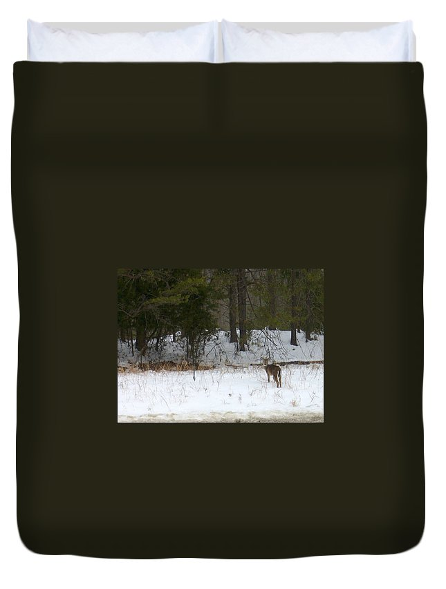 Snow Deer Duvet Cover featuring the photograph Eternity by Yow-Ning Chang