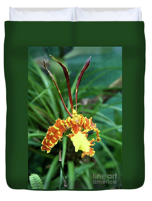 Orchid Duvet Cover featuring the photograph Delicate Yellow Spider Orchid by Christiane Schulze Art And Photography