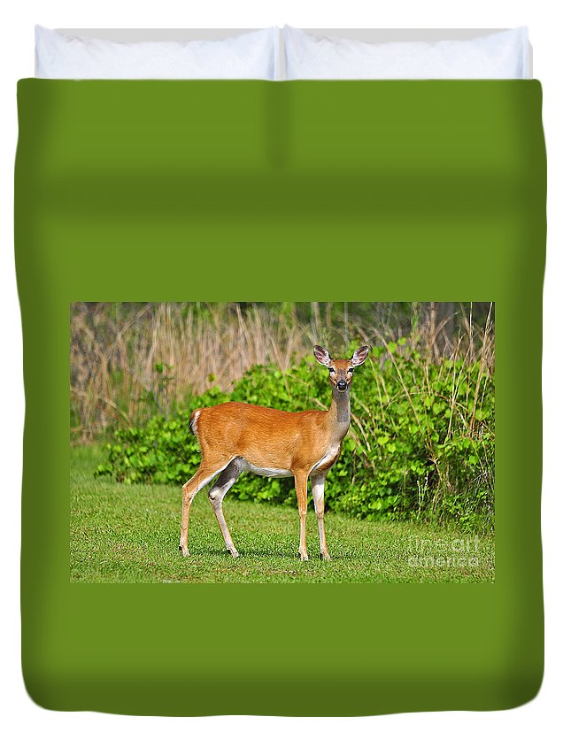 Deer Duvet Cover featuring the photograph Delightful Doe by Al Powell Photography USA