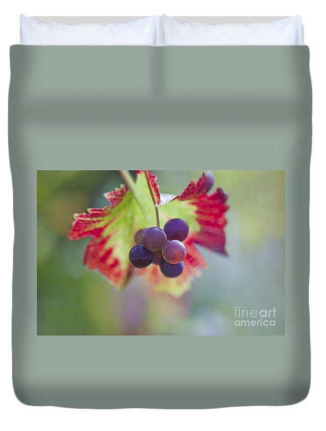 Grape Duvet Cover featuring the photograph Delightful Moment by Maria Ismanah Schulze-Vorberg
