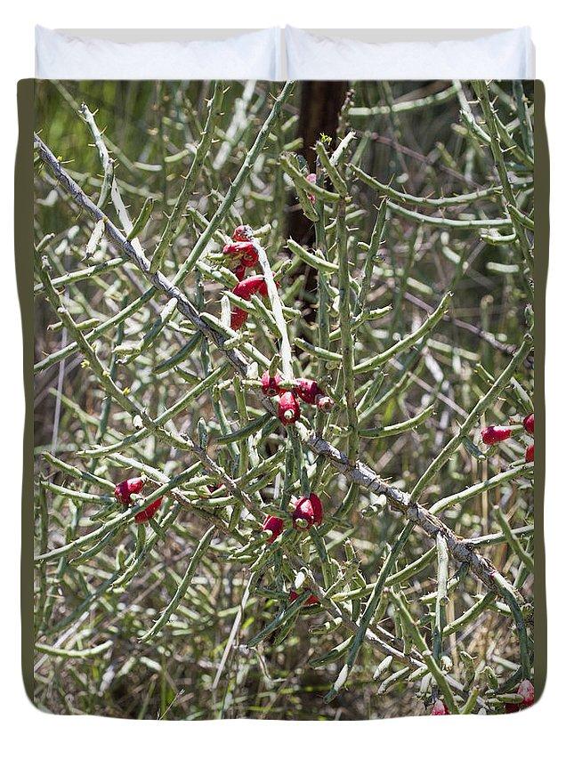 Christmas Cacti.Desert Christmas Cacti Cylindropuntia Leptocaulis Duvet Cover