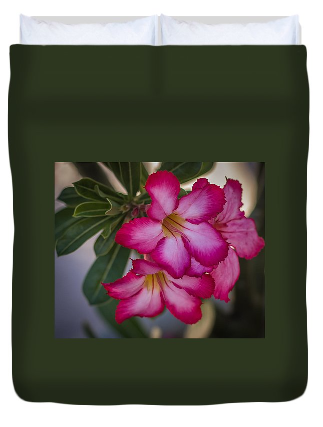 Flower Duvet Cover featuring the photograph Desert Roses by Jane Luxton