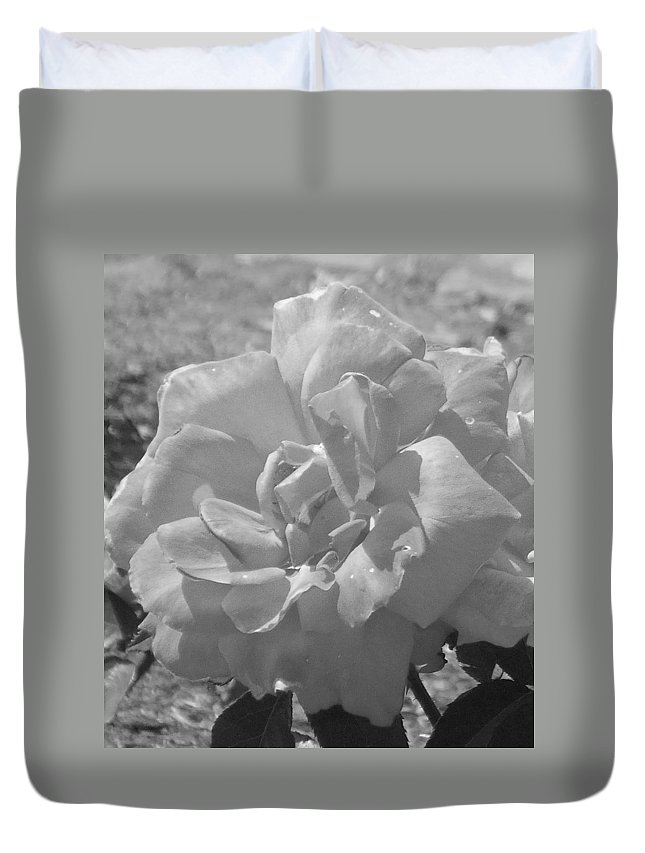 Rose Duvet Cover featuring the photograph Dew Rose by Pharris Art