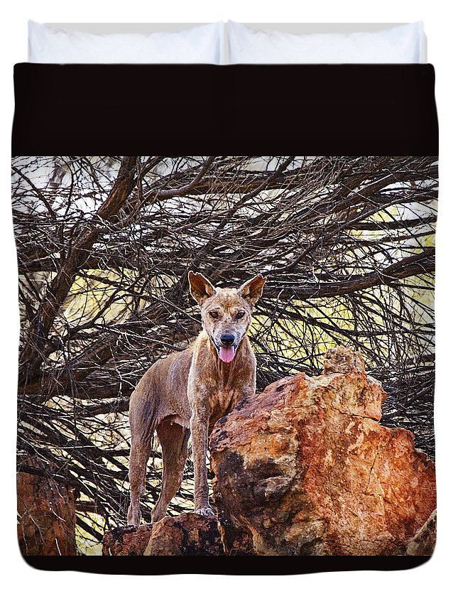 Dingo Duvet Cover featuring the photograph Dingo In The Wild V5 by Douglas Barnard