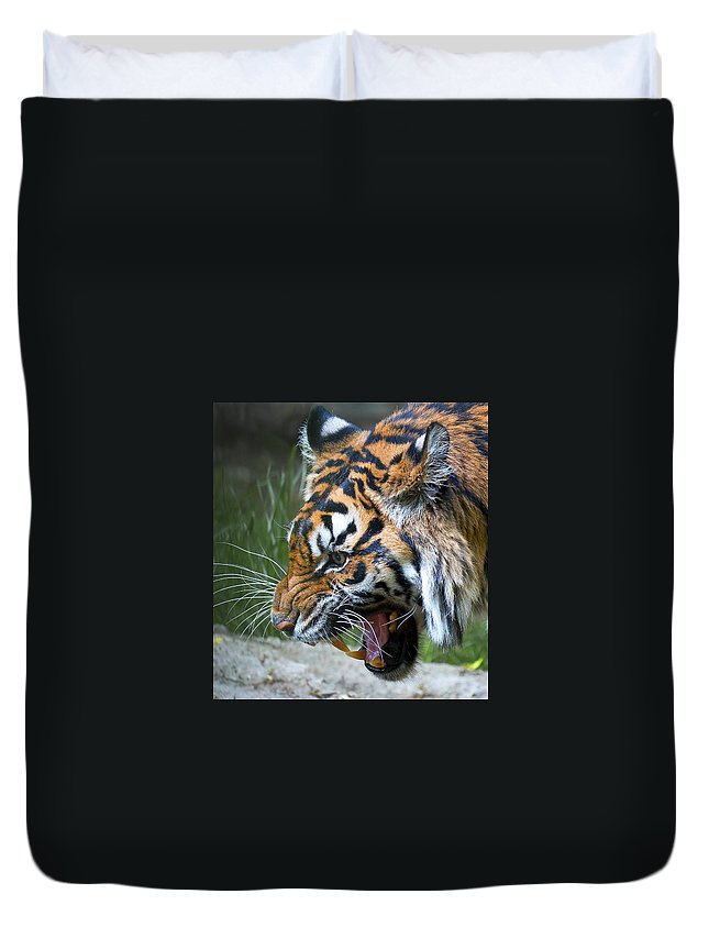 Tiger Duvet Cover featuring the photograph Dinnertime Now by Mark McKinney