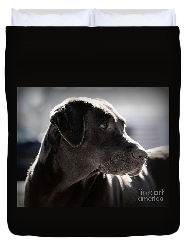 Dog Duvet Cover featuring the photograph Distracted Dog by Kenny Glotfelty