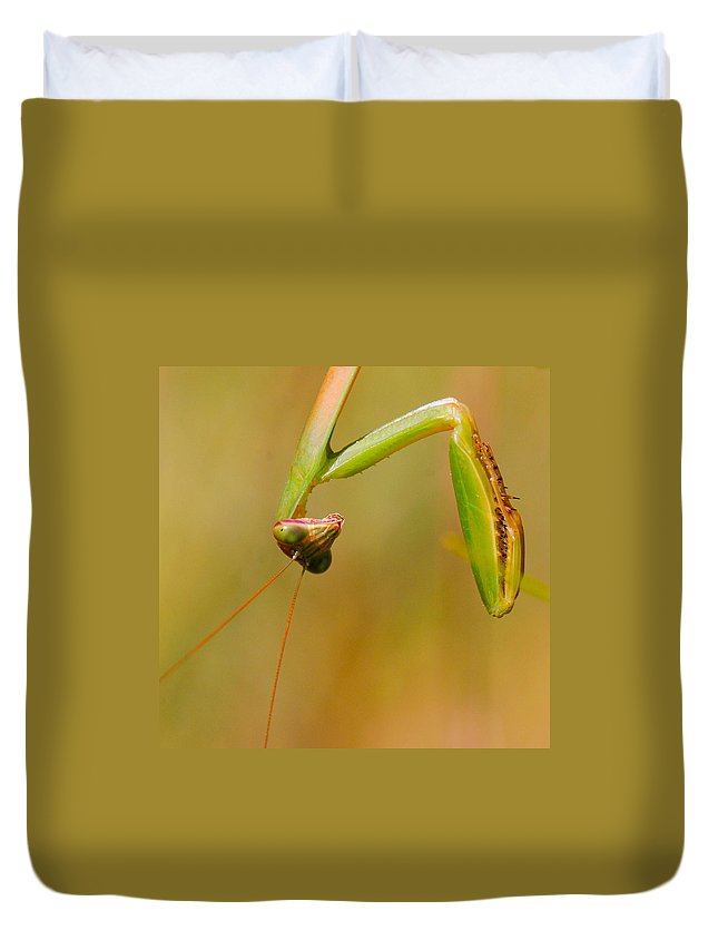 Praying Mantis Duvet Cover featuring the photograph Do You Mind? by Amy Porter