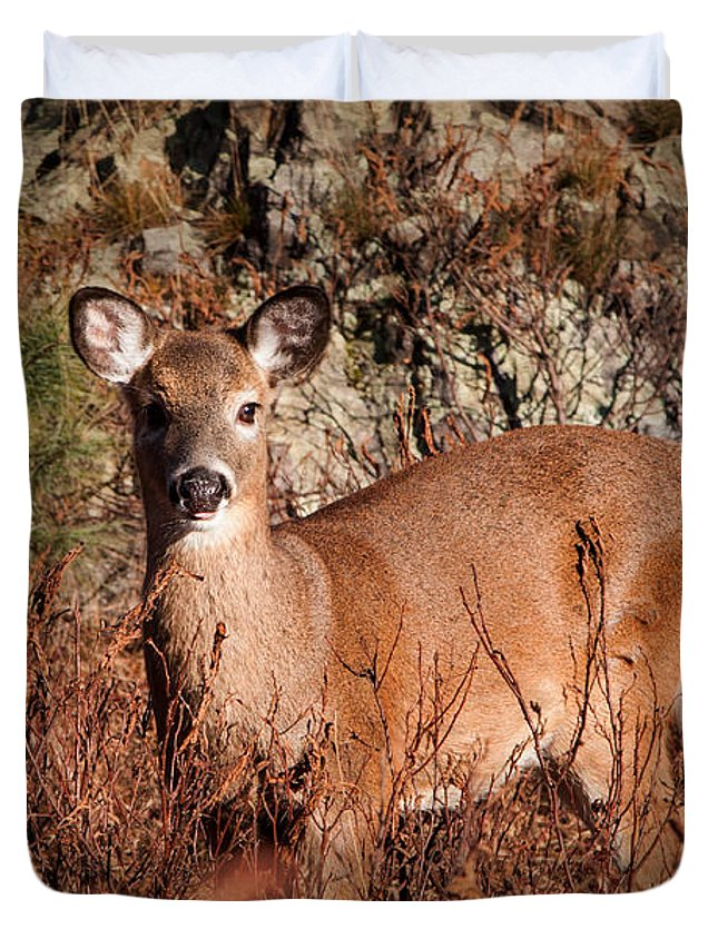 Doe Duvet Cover featuring the photograph Doe by K Hines