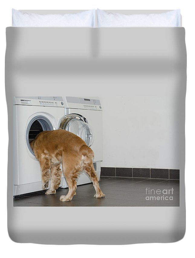 Dog Duvet Cover featuring the photograph Dog And Washing Machine by Mats Silvan