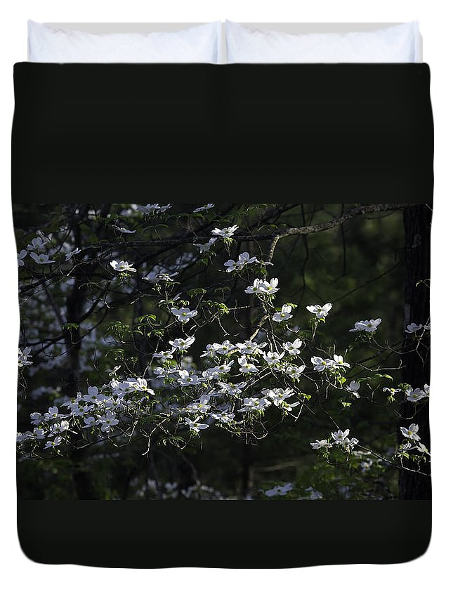 Dogwood Duvet Cover featuring the photograph Dogwood Sunset by Michael Dougherty