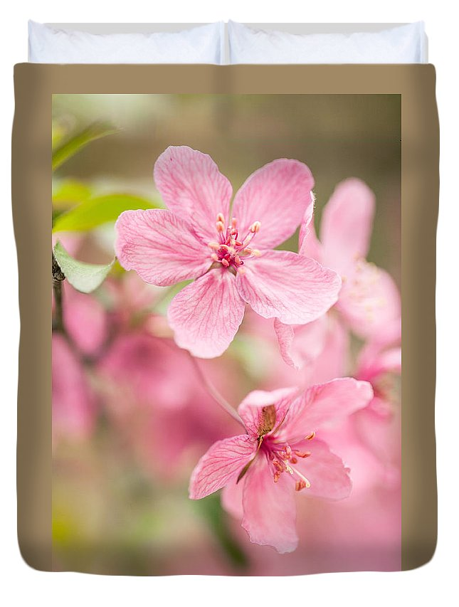 April Duvet Cover featuring the photograph Dogwood Tree Bloom Close Up In Spring by Carol Mellema