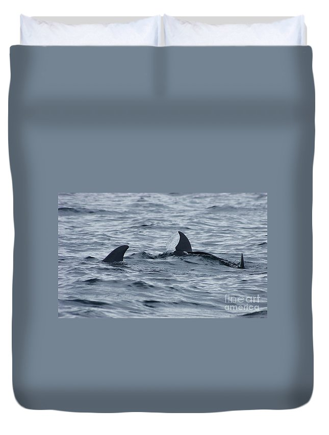 Nature Duvet Cover featuring the photograph dolphins in Panama by Rudi Prott