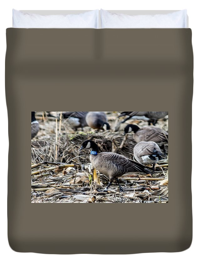 Geese Duvet Cover featuring the photograph Double Banded Aleutian by Brian Williamson