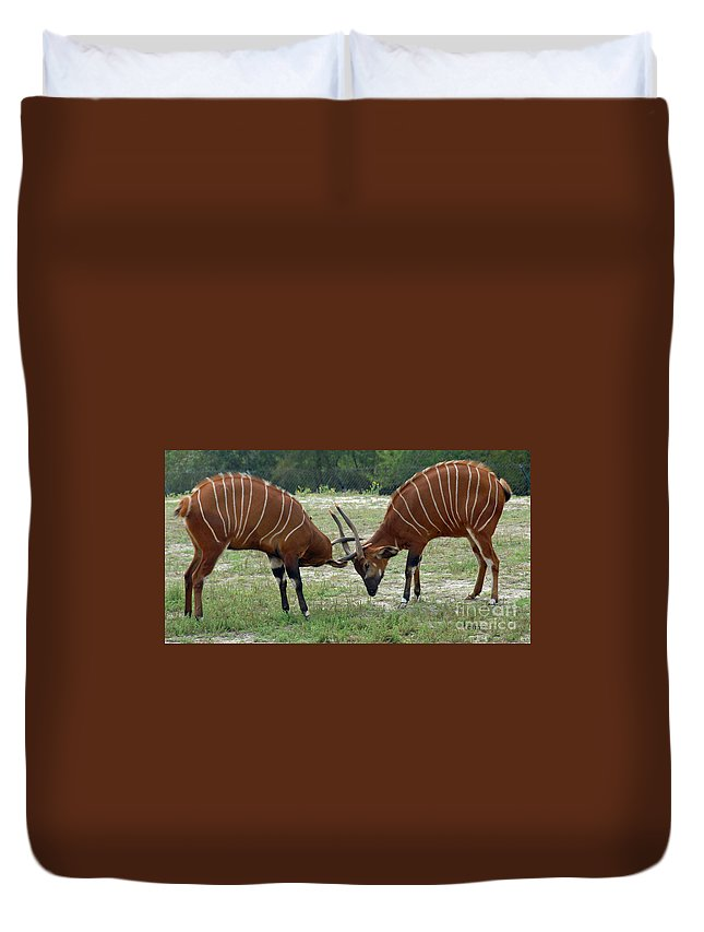 Animals Duvet Cover featuring the photograph Double Bongo by Cindy Manero