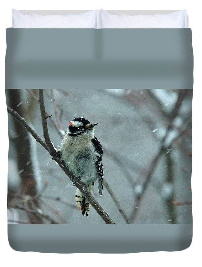 Downey Duvet Cover featuring the photograph Downey Snow by Robert DeFosses