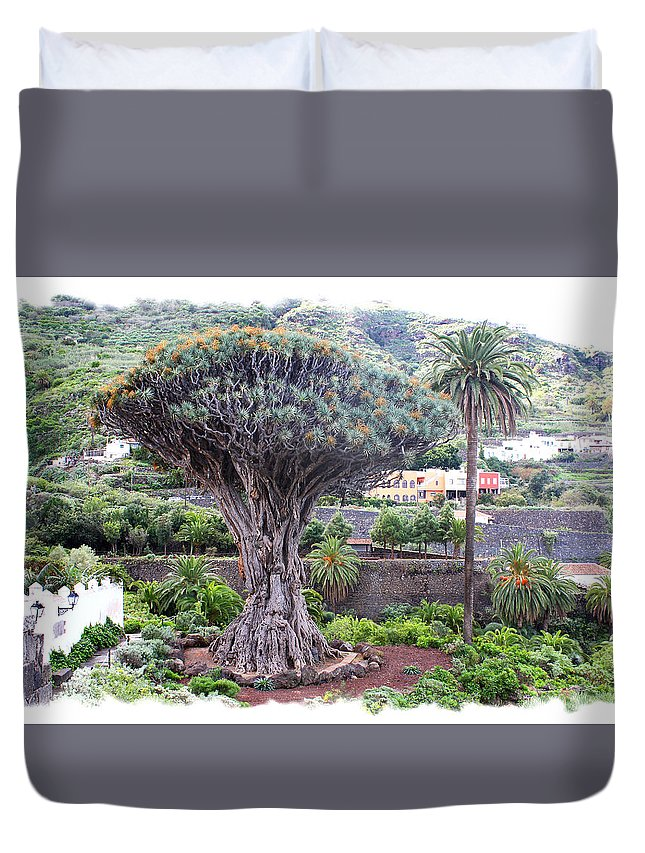 Old Dragon Tree Duvet Cover featuring the photograph Dragon Tree by Ha Ko