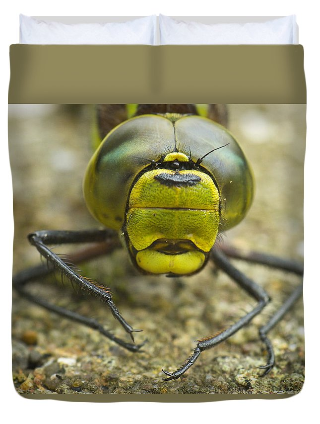 Southern Hawker Dragonfly Duvet Cover featuring the photograph Dragonfly Close-up by Rachel Down