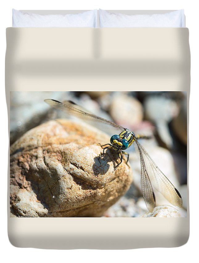 Damselfly Duvet Cover featuring the photograph Dragonfly by Marco Oliveira