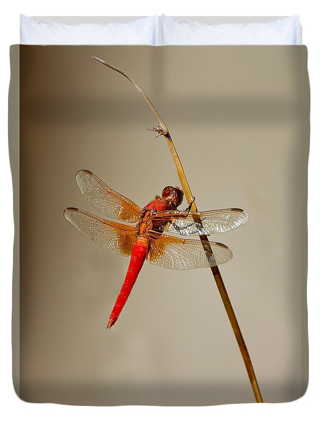 Animal Duvet Cover featuring the photograph Dragonfly On Dead Reed by Anthony Mercieca