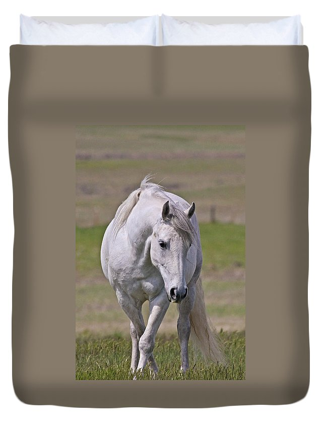 Horses Duvet Cover featuring the photograph Lipizzane Dreaming by Athena Mckinzie