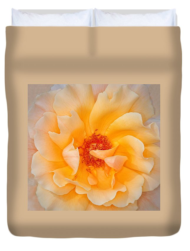 Rose Duvet Cover featuring the photograph Dreamy Orange Rose by Dave Mills