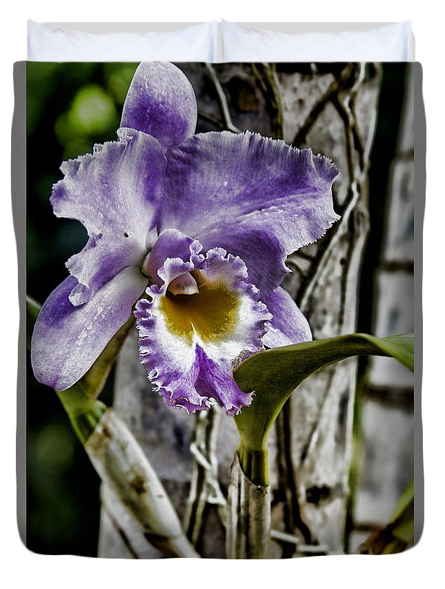 Orchid Duvet Cover featuring the photograph Dressed In Purple by Douglas Barnard