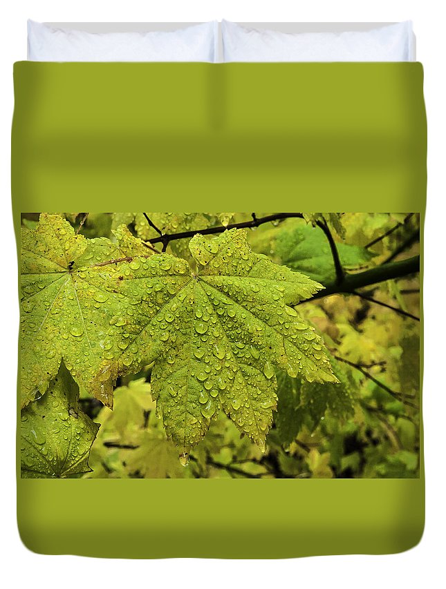 Autumn Duvet Cover featuring the photograph Dripping Vine Maple by Curtis Knight