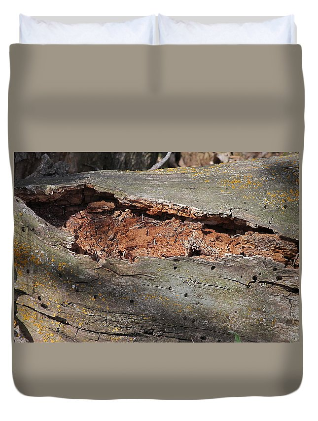 Tree Duvet Cover featuring the photograph Dry Rotting Tree by Wayne Williams