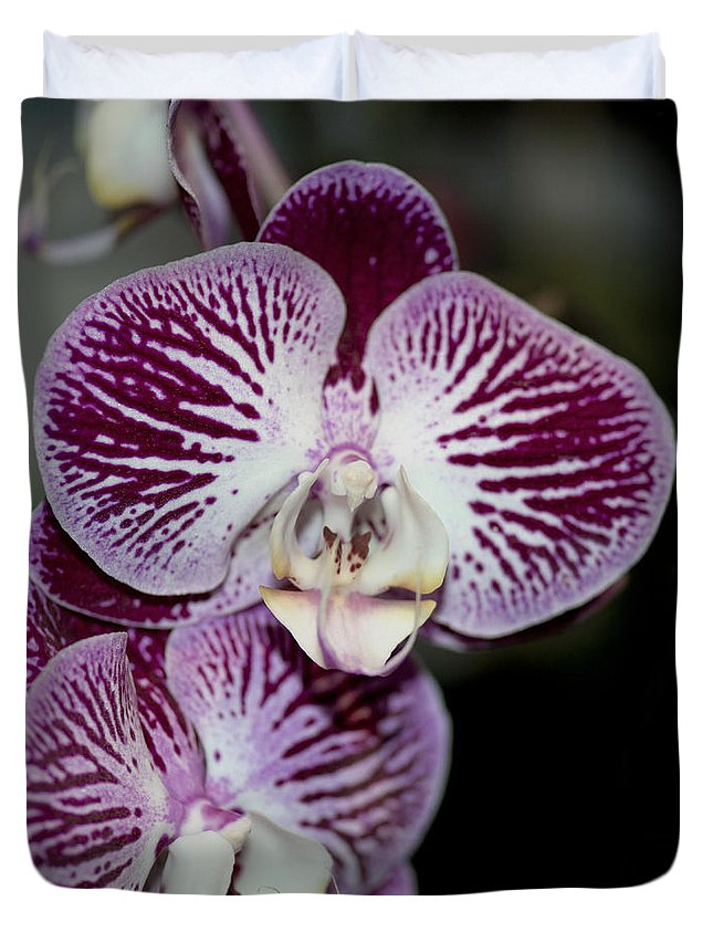 Purple Orchid Duvet Cover featuring the photograph Dtps Chian Xen Piano by Terri Winkler
