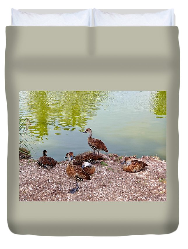 Color Duvet Cover featuring the photograph Duck Pond by Amar Sheow