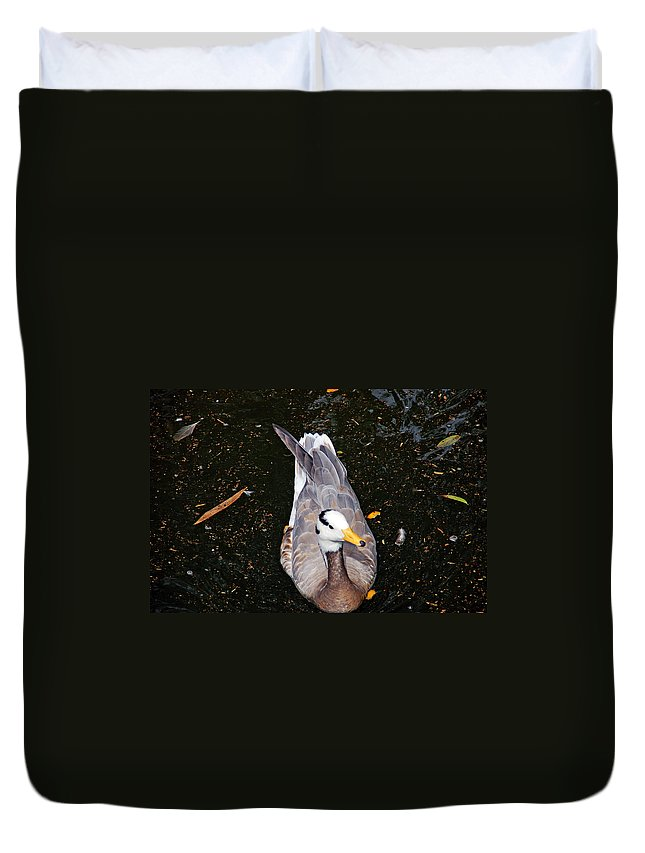 Duck Duvet Cover featuring the photograph Duck Portrait by Aimee L Maher ALM GALLERY