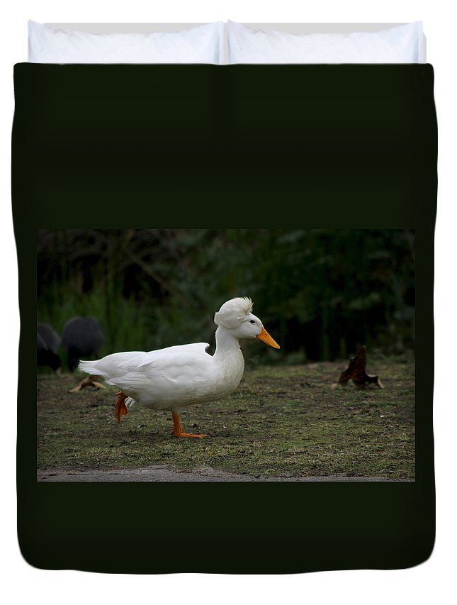 Duck Duvet Cover featuring the photograph Duck With Stylish Hair by Diana Haronis