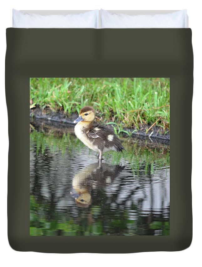 Duck Duvet Cover featuring the photograph Duckling With Reflection by Richard Bryce and Family