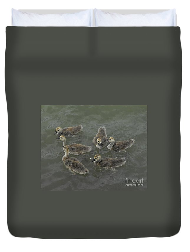 Ducks Duvet Cover featuring the photograph Ducklings by Brandi Maher