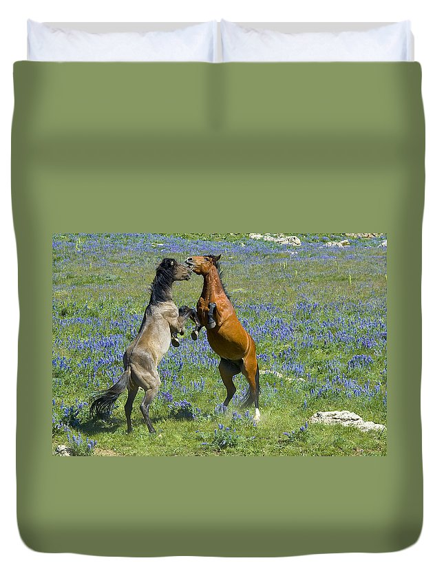 Mustangs Duvet Cover featuring the photograph Dueling Mustangs by Gary Beeler