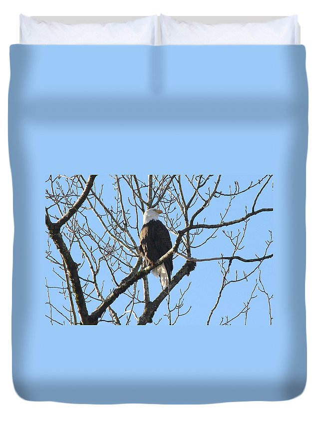 Bald Eagle Duvet Cover featuring the photograph Bald Eagle Profile by Ian Mcadie