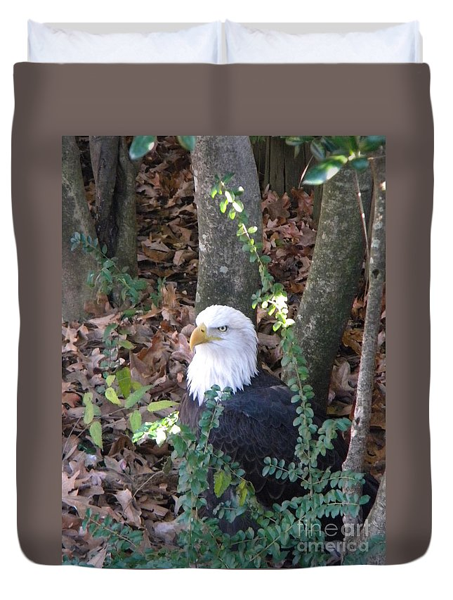 Eagle Duvet Cover featuring the photograph Eagle Pose by Nathanael Smith