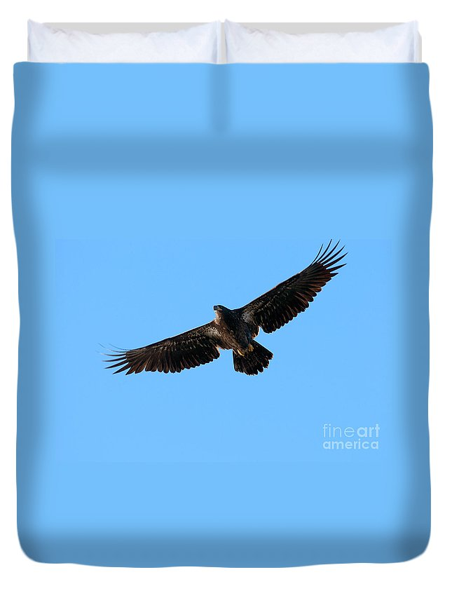Bald Eagle Duvet Cover featuring the photograph Eagle Wings by Sharon Talson