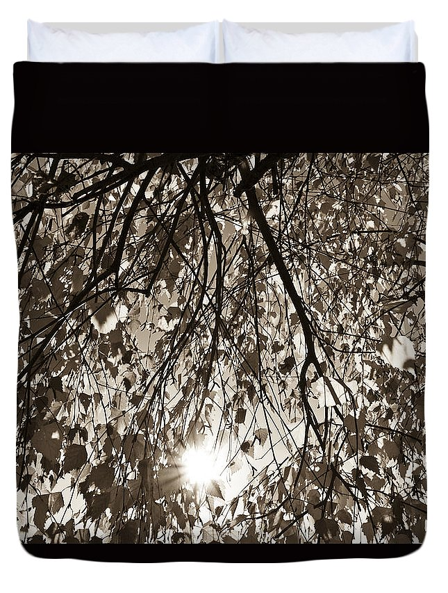 Autumn Duvet Cover featuring the photograph Early Autumn Sepia by David Pyatt