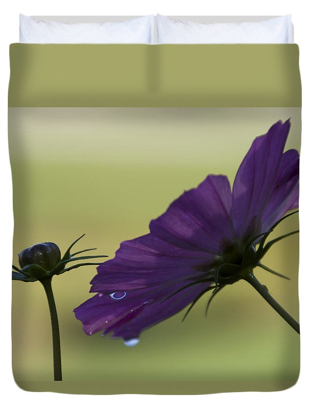 Flower Duvet Cover featuring the photograph Early Dawns Light On Fall Flowers 01 by Thomas Woolworth