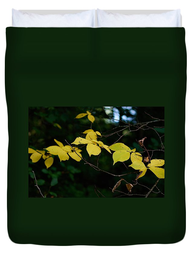 Finland Duvet Cover featuring the photograph Early Fall Of Wych Elm by Jouko Lehto