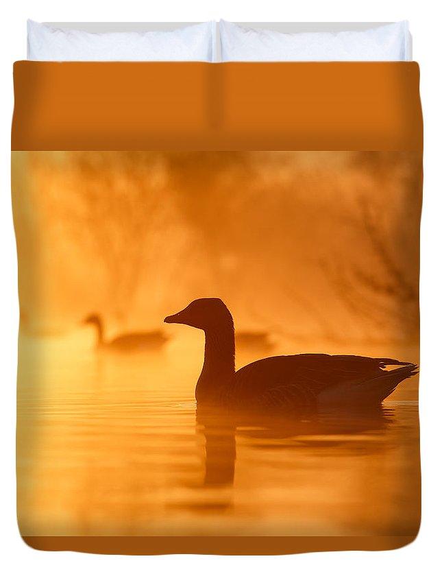 Goose Duvet Covers