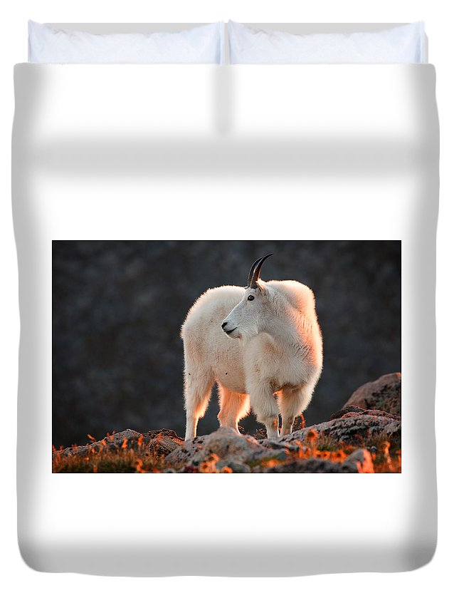 Mountain Goat Photograph Duvet Cover featuring the photograph East Of Evening by Jim Garrison