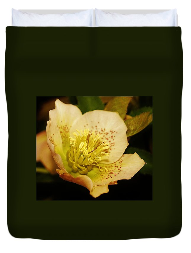 Easter Duvet Cover featuring the photograph Easter Bloom 2014 by Daniel Thompson