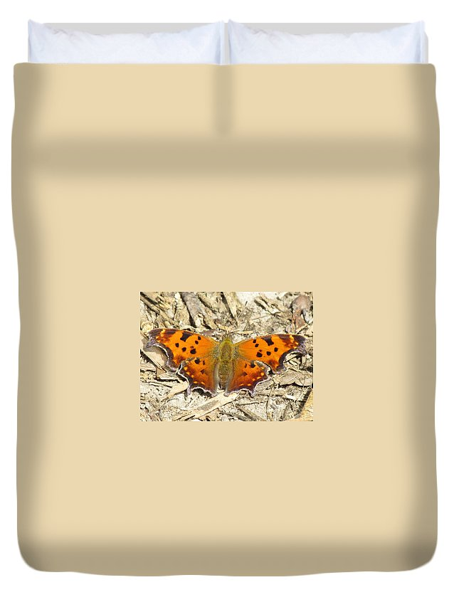 Eastern Comma(polygania Interrogationis) Duvet Cover featuring the photograph Eastern Comma by Eric Noa