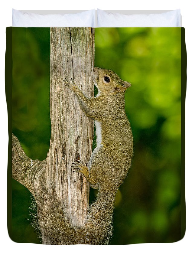 Eastern Gray Squirrel Duvet Cover featuring the photograph Eastern Gray Squirrel by Anthony Mercieca