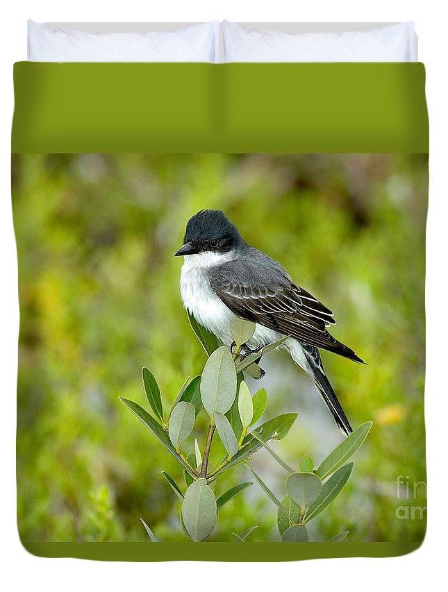 Animal Duvet Cover featuring the photograph Eastern Kingbird by Anthony Mercieca