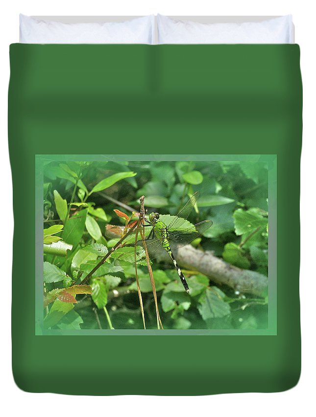 Dragonfly Duvet Cover featuring the photograph Eastern Pondhawk Female Dragonfly - Erythemis Simplicicollis - On Pine Needles by Mother Nature