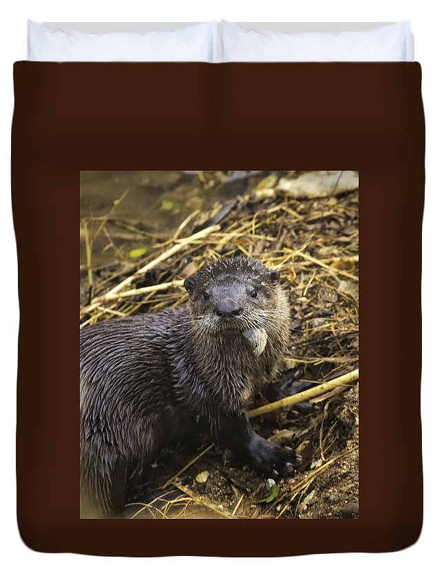 River Otter Duvet Cover featuring the photograph Eatin' My Fish by Michael Dougherty