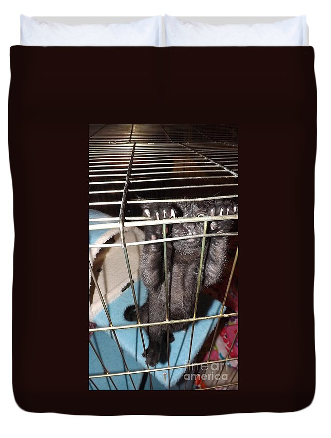 Kitten Duvet Cover featuring the photograph Ebony Hang In There by Jussta Jussta